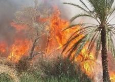 حريق يأتي على نحو 100 نخلة بواحة تيغمرت بكلميم.
