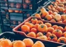 المغرب يصدر حوالي 14مليون كلغ من الطماطم لموريتانيا.