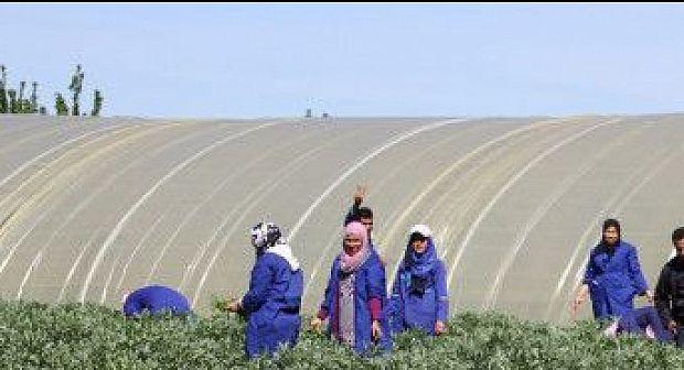 عاملون يعانون في صمت بضيعات فلاحية بجماعة تالوين تاركاوساي.