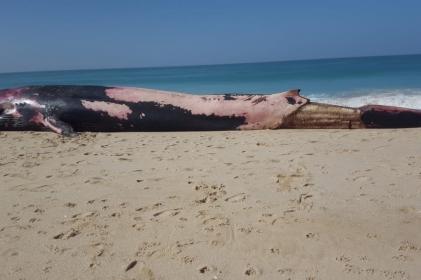بحر لمهيريز يلفظ حوت ضخم