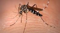 """غياب طبيب بالمعبر الحدودي""""الكركرات"""" يزيد من معاناة مصابين بمرض الملاريا."""