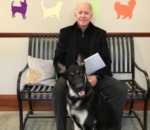 """الرئيس الأمريكي المنتخب """"بايدن"""" أصيب  في الكاحل أثناء اللعب مع كلبه"""