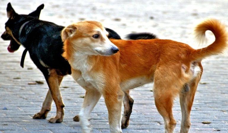 جماعة لقصابي الكلاب الضالة تهدد